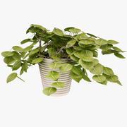Plant 03 3d model