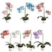 Flores de orquídeas 3d model
