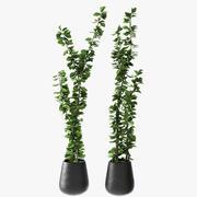 Planta exótica en maceta - Planta exterior - Planta de jardín modelo 3d