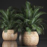 Dekorative Palme in einem Topf 3d model
