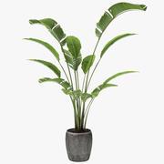 Экзотический горшок с тропической пальмой 3d model