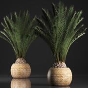 鍋に装飾用のヤシの木 3d model