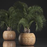 Palma decorativa in una pentola 5 3d model