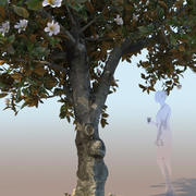 榕树nitida开花 3d model