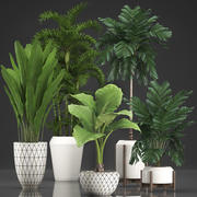 Collection Exotic plants 349 3d model