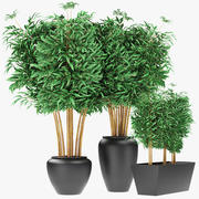 Bamboe planten exotische planten 3d model