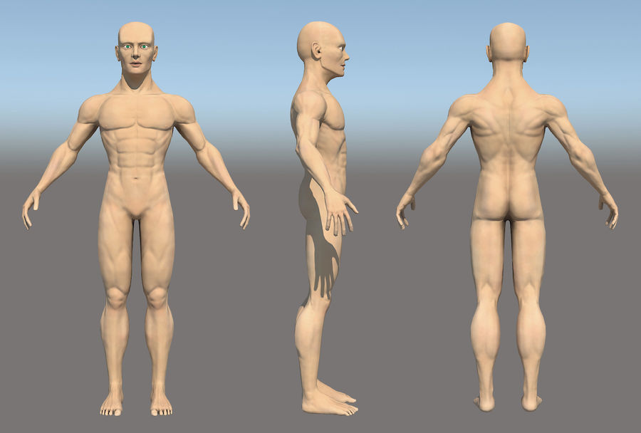 解剖学的体 royalty-free 3d model - Preview no. 1