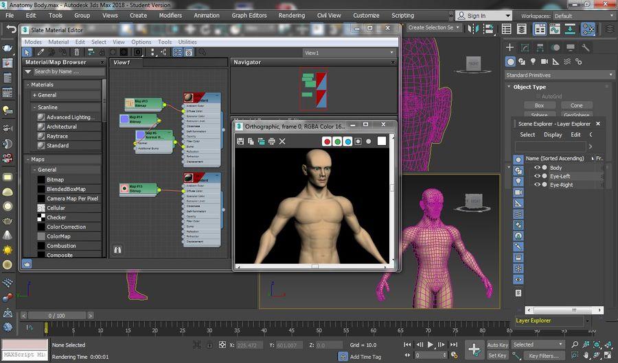 解剖学的体 royalty-free 3d model - Preview no. 5