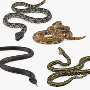 Collection de serpents gréés 2 3d model