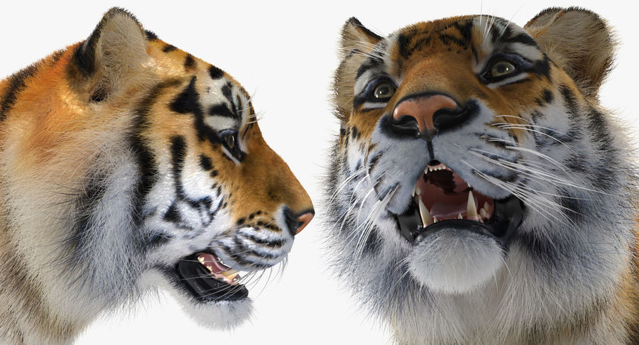 African Animals Collection 5 royalty-free 3d model - Preview no. 42