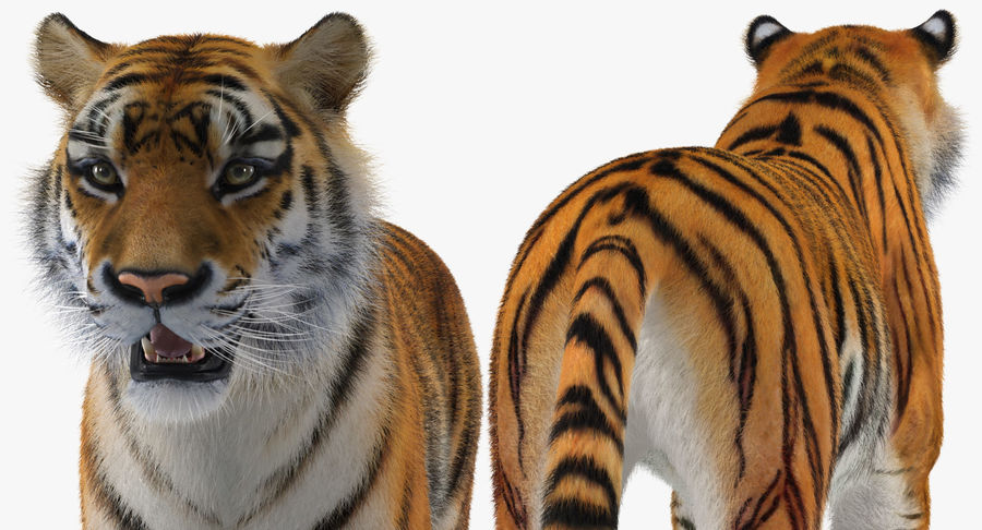 African Animals Collection 5 royalty-free 3d model - Preview no. 41