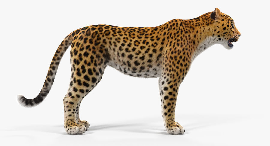 African Animals Collection 5 royalty-free 3d model - Preview no. 31