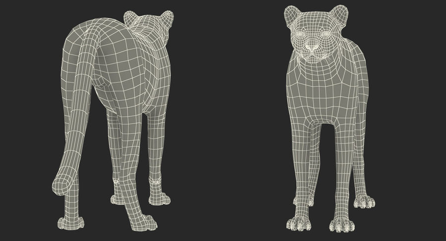 African Animals Collection 5 royalty-free 3d model - Preview no. 61