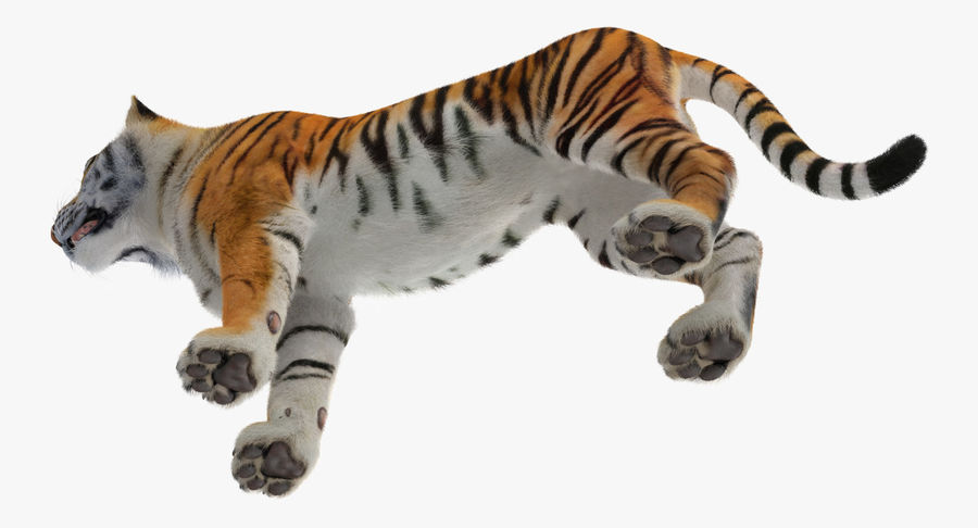 African Animals Collection 5 royalty-free 3d model - Preview no. 39