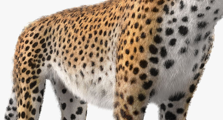 African Animals Collection 5 royalty-free 3d model - Preview no. 27
