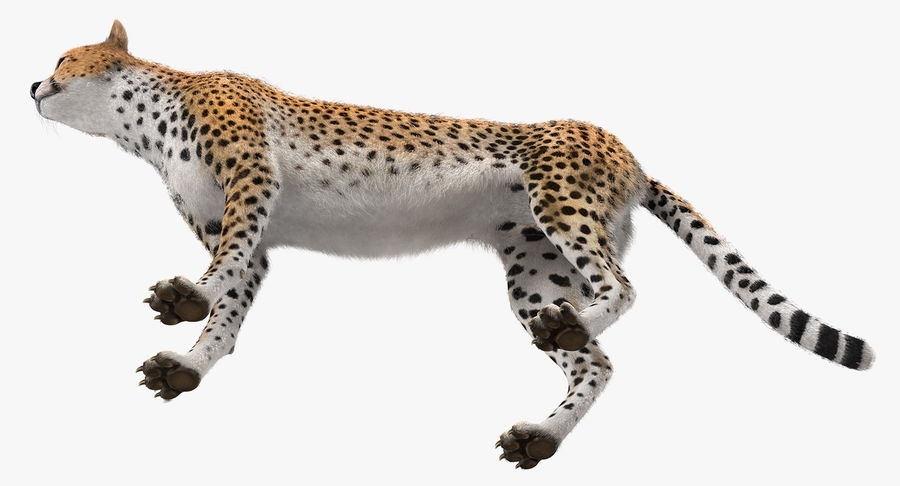 African Animals Collection 5 royalty-free 3d model - Preview no. 28