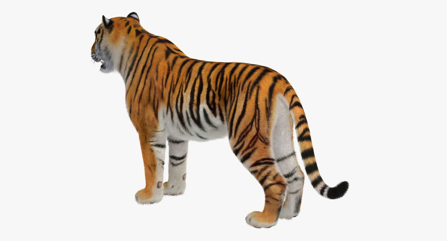 African Animals Collection 5 royalty-free 3d model - Preview no. 37