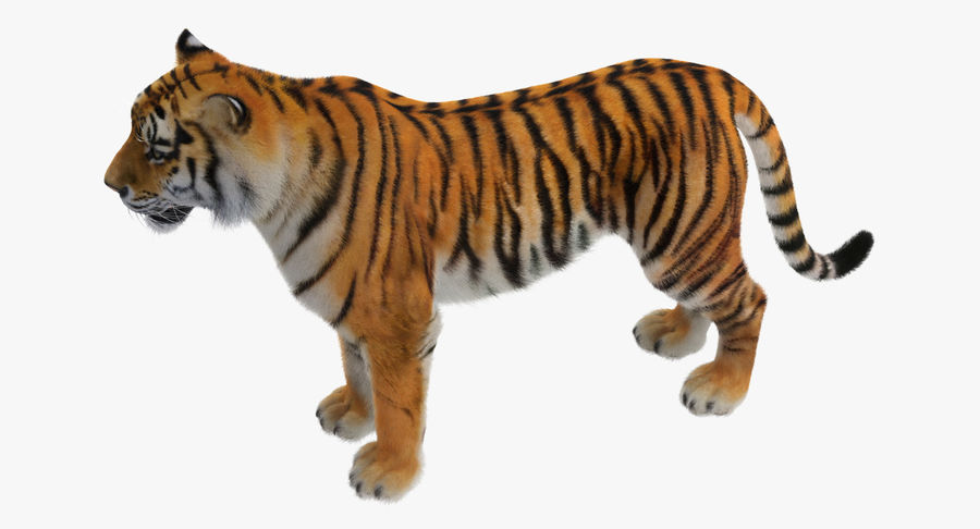 African Animals Collection 5 royalty-free 3d model - Preview no. 38