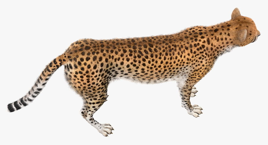 African Animals Collection 5 royalty-free 3d model - Preview no. 24