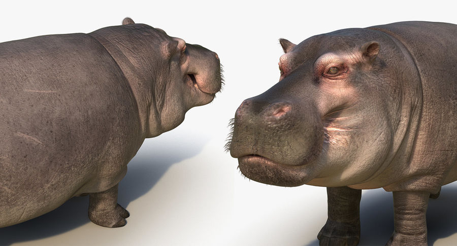 African Animals Collection 5 royalty-free 3d model - Preview no. 57