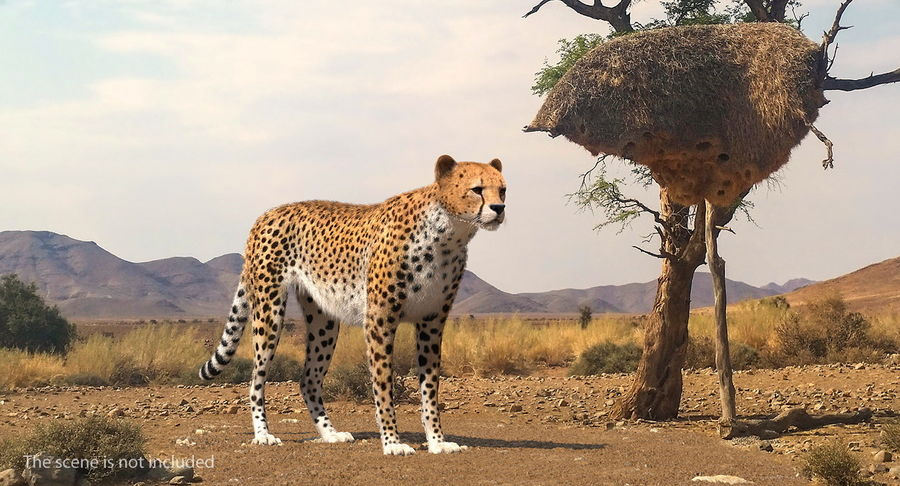 African Animals Collection 5 royalty-free 3d model - Preview no. 22