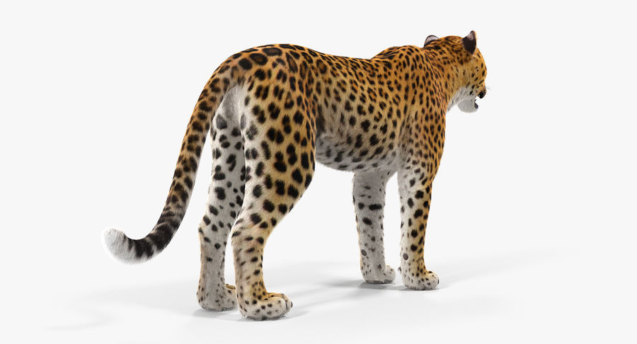 African Animals Collection 5 royalty-free 3d model - Preview no. 32