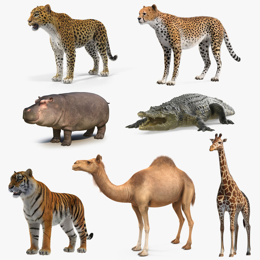 African Animals Collection 5 royalty-free 3d model - Preview no. 1