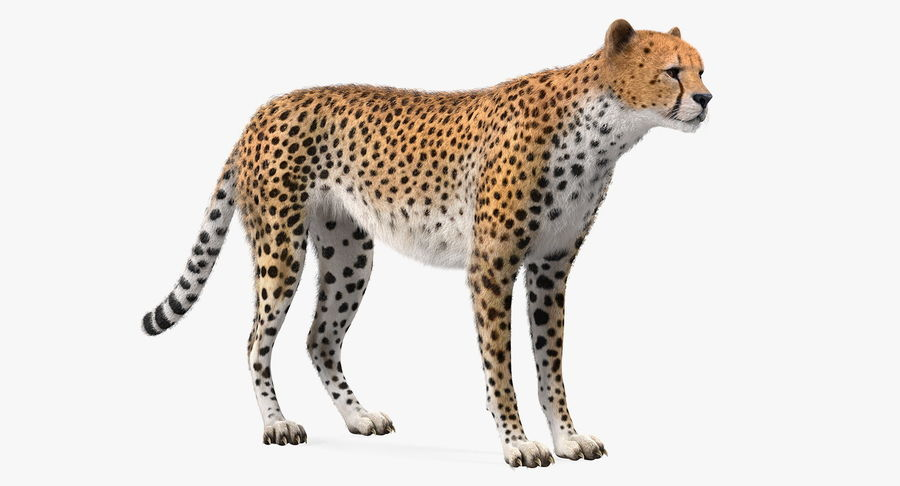 African Animals Collection 5 royalty-free 3d model - Preview no. 21