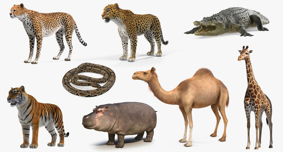 African Animals Collection 5 royalty-free 3d model - Preview no. 2