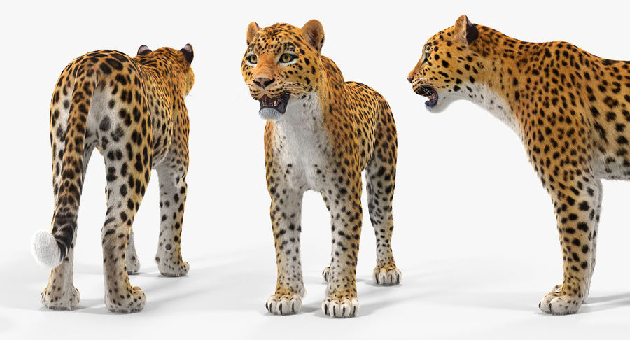 African Animals Collection 5 royalty-free 3d model - Preview no. 30