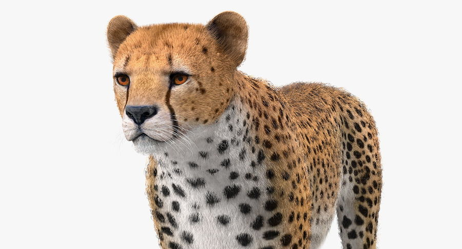 African Animals Collection 5 royalty-free 3d model - Preview no. 25