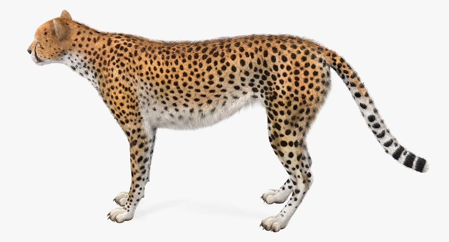 African Animals Collection 5 royalty-free 3d model - Preview no. 23