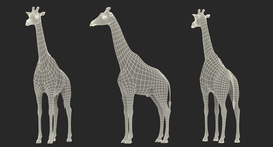 African Animals Collection 5 royalty-free 3d model - Preview no. 60