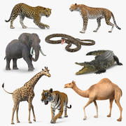 Rigged African Animals Collection 5 3d model