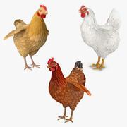 Kippen Collectie 3d model