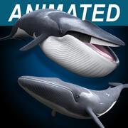 지느러미 고래 3d model