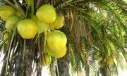 Animowany pakiet palmy kokosowej 12 (2) 3d model