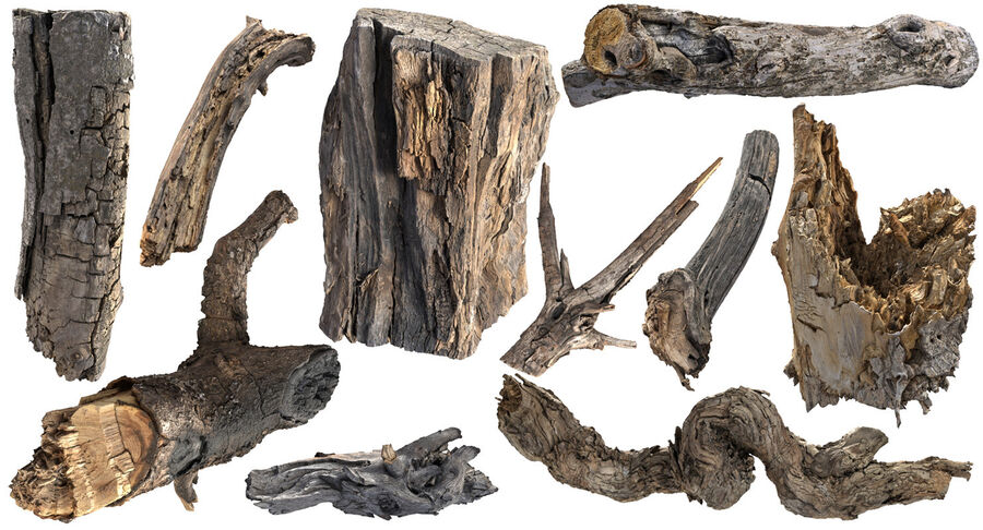 Tree Branch Collection A royalty-free 3d model - Preview no. 2