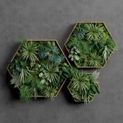 Decorative Pentagonal  Moss Set 3d model
