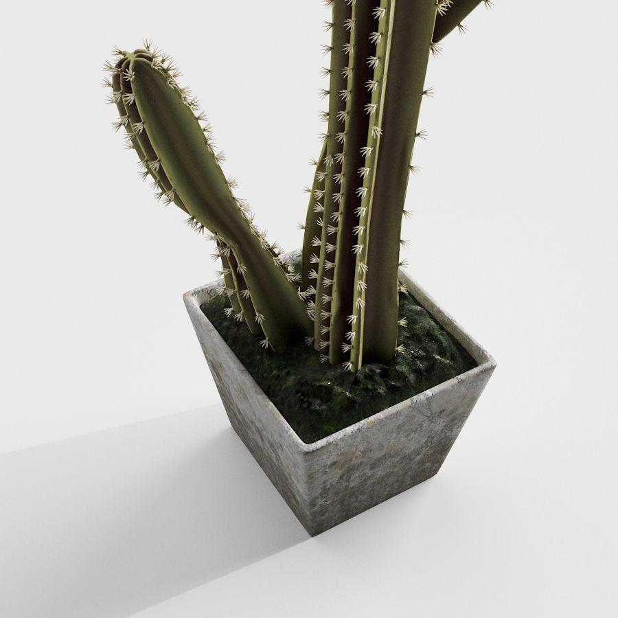 Rośliny kaktusowe royalty-free 3d model - Preview no. 4