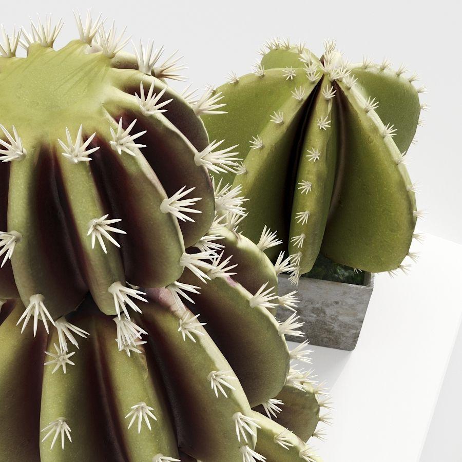 Rośliny kaktusowe royalty-free 3d model - Preview no. 3