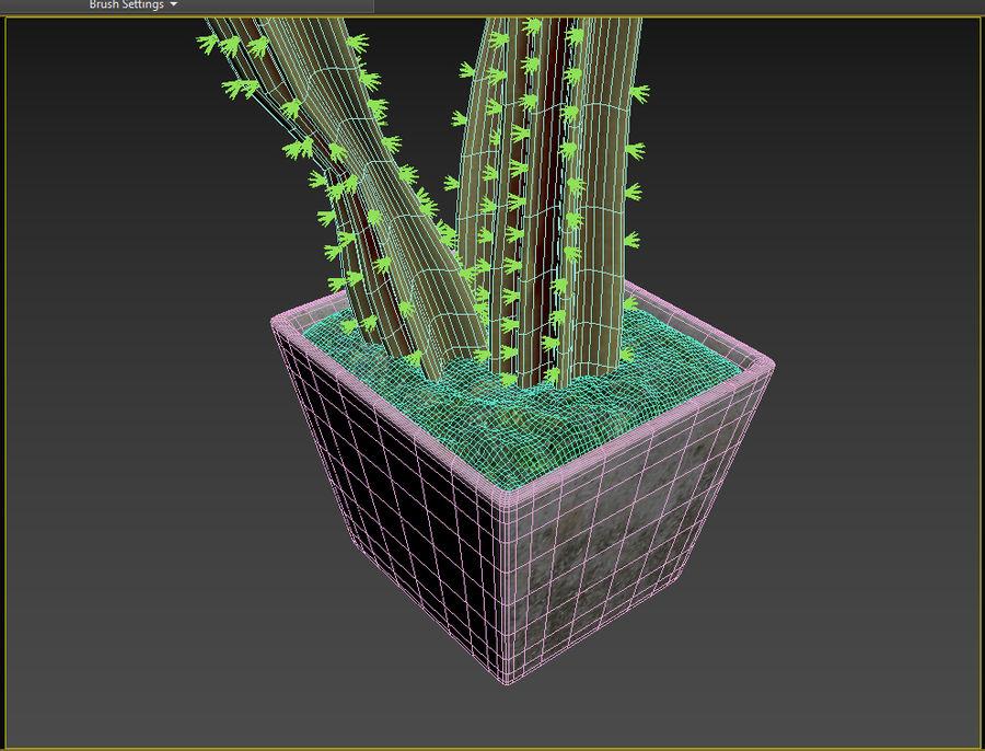 Rośliny kaktusowe royalty-free 3d model - Preview no. 7