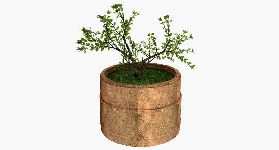Plante royalty-free 3d model - Preview no. 2