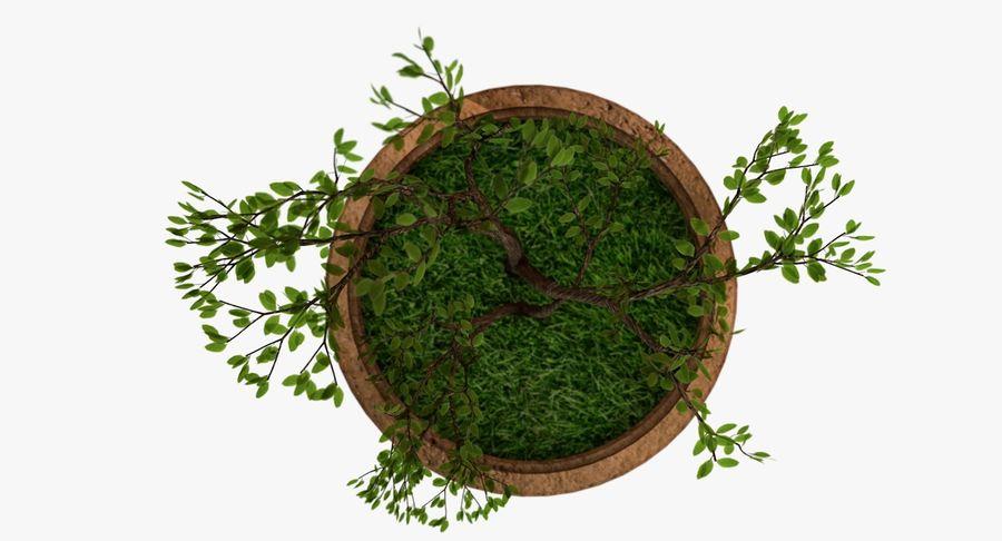 Plante royalty-free 3d model - Preview no. 4