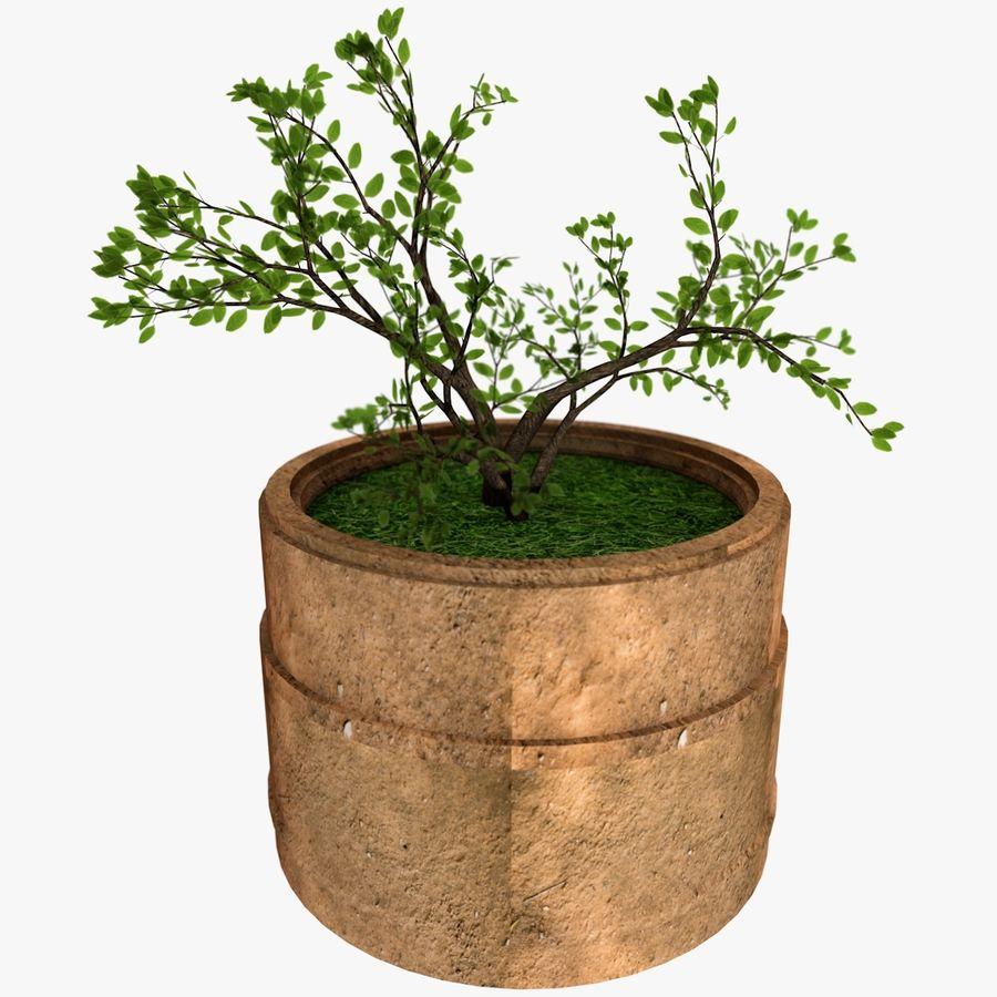 Plante royalty-free 3d model - Preview no. 1
