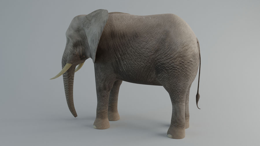 Elephant royalty-free 3d model - Preview no. 5