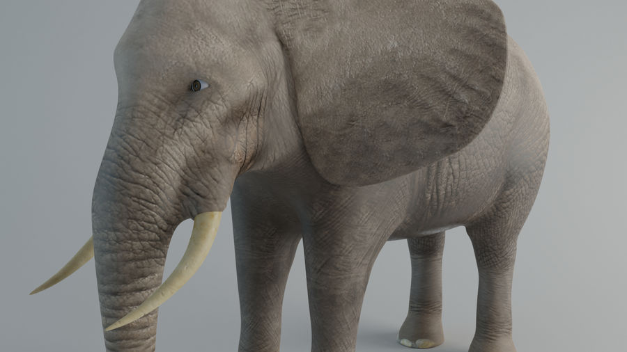 Elephant royalty-free 3d model - Preview no. 6