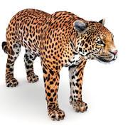捷豹 3d model