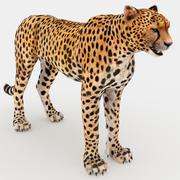 guepardo 3d model