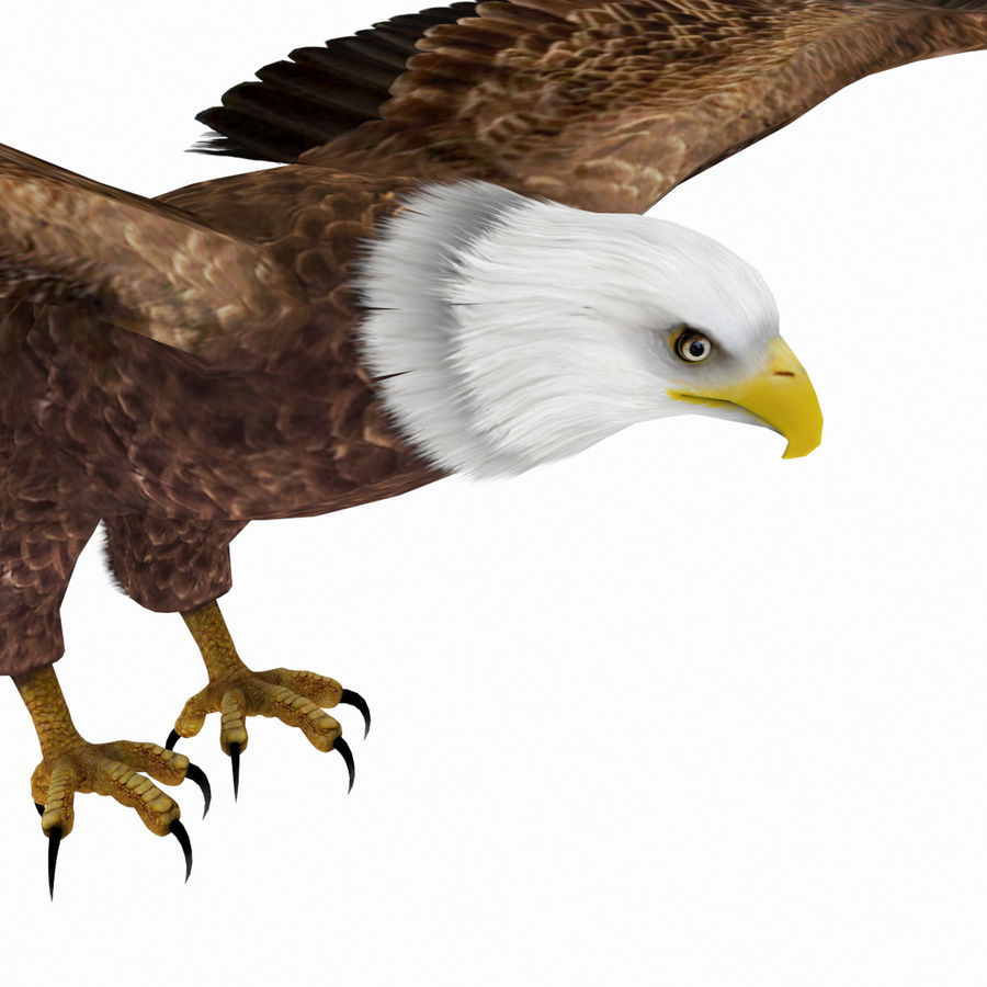 Bald Eagle royalty-free 3d model - Preview no. 5